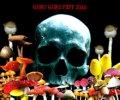 V.A / GURUGURU FEST 2010 (cd) Chaotic noise