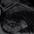 BROILER, TRIKORONA / split -Split bird- (cd) Impulse