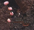 BRIDGE TO SOLACE / Kingdom of the dead (cd) Let it burn